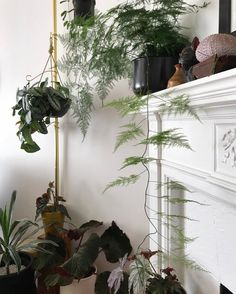 Asparagus Fern cascading from mantle. @habitpattern.sf