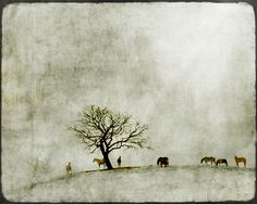up on this earth... by jamie heiden, via Flickr
