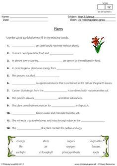 plants need leaves worksheet plants pinterest student centered. Black Bedroom Furniture Sets. Home Design Ideas