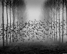 by Philippe Lestrade
