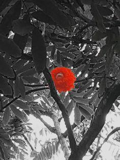 Botanische tuinen Mauritius