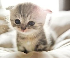 soft kitty, warm kitty, little ball of furrrr