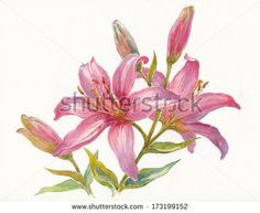 Stock Images similar to ID 210693718 - hand drawing flower vector ...