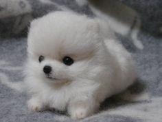 羊毛フェルト  ハンドメイド ☆☆☆ポメラニアン仔犬☆☆☆_画像2
