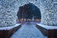 Antler Arch in Jackson Hole, WY at Christmastime