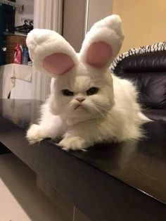 Happy Easter m - your daily dose of funny cats - cute kittens - pet memes - pets in clothes - kitty breeds - sweet animal pictures - perfect photos for cat moms Cute Funny Pics, Cute Cat Memes, Cute Animal Memes, Cute Funny Animals, Funny Animal Pictures, Funny Cats, Pet Memes, Memes Humor, Funny Images