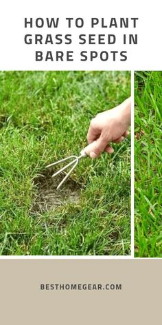 How To Plant Grass Seed In Bare Spots - Best Home Gear Bare spots in your lawn are almost inevitable Planting Grass Seed, How To Plant Grass, How To Grow Grass, Growing Grass From Seed, Dyi, Lawn Repair, Bermuda Grass, Lawn Care Tips, Lawn Maintenance