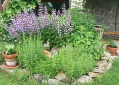 Autor: Edit Kraut, Herb Garden, Herbs, Plants, Gardening, Ideas, Lawn And Garden, Herbs Garden, Herb