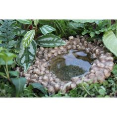 Fairy Pond: Fairy Garden