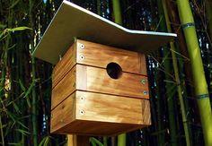 modern bird case study house