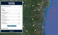 Viper Shark tracker