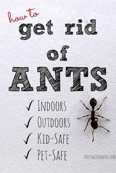 Once you've seen one ant in your home you're bound to see more. Here's how to get rid of them safely then keep them away for good.