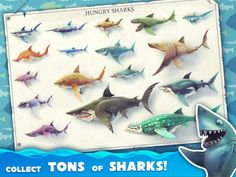 Hungry Shark World Cheats, Tips, & Tricks  #Android #hungrysharkworld #ios http://gazettereview.com/2016/05/hungry-shark-world-cheats-tips-tricks/