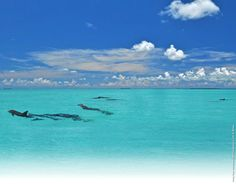 Want to experience the best of Key West? Key West Shore Excursions like jet ski tours and snorkeling show you incredible marine life & tropical scenery.