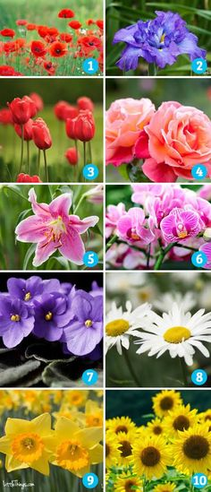 Choose the flower that you are most drawn to below. If your all-time favorite flower isn't listed, choose the one you like best from these options. Once you have decided on your favorite, keep scrolling down until you find your results.
