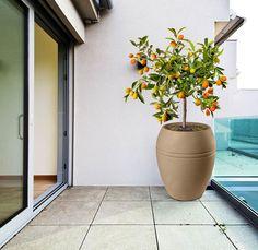 Cultivar / plantar limão em vasos