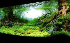 aquarios plantados - Pesquisa Google