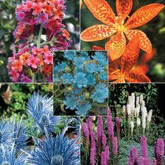 Butterfly garden collection   dutchbulbs.com
