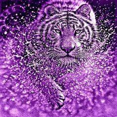 Purple Tiger Making a Big Splash. Purple Art, Purple Love, All Things Purple, Shades Of Purple, Tiger Images, Tiger Pictures, Big Cats Art, Cat Art, Animal Paintings