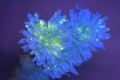 Flower Science Experiment for Kids: DIY Glowing Flowers