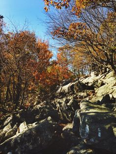 adventure-inspired: Hiking Pennsylvania: The Pinnacle and Pulpit Rock via the Appalachian Trail