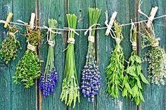 Gastromania - Ervas de Provence