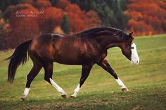 www.horsealot.com, the equestrian social network for riders & horse lovers | Equestrian Photography : Carina Maiwald.
