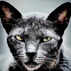 """@shoji_ogawa_unlimited's photo: """"#新世界 #shinsekai #cat"""""""