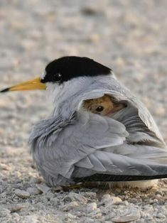 15 Chirpful Bird Snuggles To Complete Your Day - World's largest collection of cat memes and other animals Pretty Birds, Love Birds, Beautiful Birds, Animals Beautiful, Birds 2, Animals Amazing, Pretty Animals, Glass Birds, Beautiful Pictures