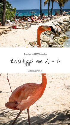 29.11.2018 - Traumstrände & glasklares Wasser - Aruba! Wo die schönsten Strände & Kitespots zu finden sind & meine Highlights verrate ich Dir im Aruba Travel Guide