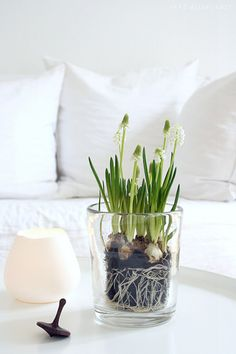 For the buffet, bulbs in glass vase
