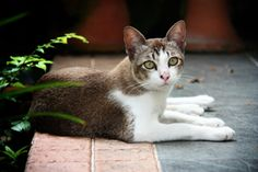 Inexpensive Cat Care   Stretcher.com - With good preventative care and planning, it is easy to keep your cat healthy and happy while keeping those claws off your pocketbook. To keep your cat care expenses low, consider some of these strategies.