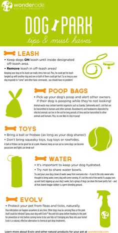 Dog Park Tips and Must Haves