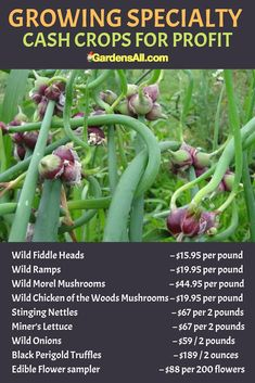 Landscaping Software - Offering Early View of Completed Project How Much Can Be Made On These Specialty Crops Is A Bit Up In The Air Because It's Such A New Market. Vegetable Ideas, Vegetable Garden, Organic Gardening, Gardening Tips, Secret Life Of Plants, Chicken Of The Woods, Wild Onions, Cash Crop, Perennial Vegetables