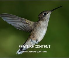 Feature Content that Answers Questions for Better SEO Spin Sucks