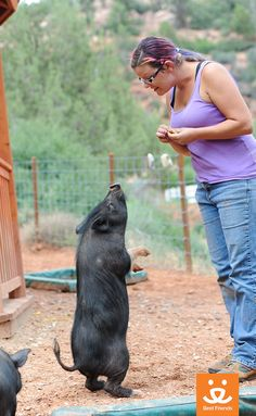 """Gopher, a pot-bellied pig resident at the sanctuary, will do just about anything for a treat! Pigs are extremely intelligent and very trainable, and Gopher quickly learned how to """"dance."""""""