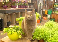 Luna-kissa Honkasen puutarhalla
