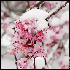 1st Day of Spring by - M i c h a e l  #Flowers #Snow