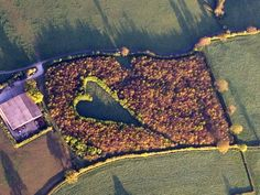 The giant heart formed with 6000 oak trees which Winston Howes planted in memory of his late wife Janet.