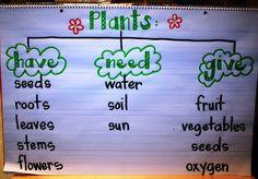 Eberharts Explorers: Plant Week!