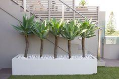 Garden Design   Tamarama