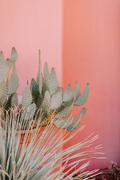 This luxe pink desert wedding was one of the first at new Palm Springs venue The Pond Estate - 100 Layer Cake Desert Aesthetic, Plant Aesthetic, Photo Wall Collage, Picture Wall, Pink Backdrop, Pink Plant, Leaf Background, Pink Walls, Palm Springs