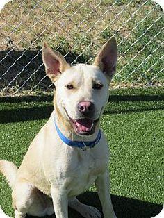 Meridian Idaho Dog Adoption