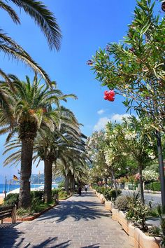 Walking along the Beach in Liguria on a Summer's Day