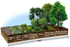 Primary succession. It occurs in areas devoid of soil.