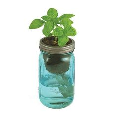 """A vintage quart-sized mason jar – outfitted with a passive hydroponics system known as """"wicking"""" –brings water up to the plant roots for a simple,"""
