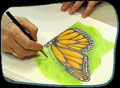 Research monarch butterflies, watch them, draw them and even plant a butterfly garden! At Howtosmile.org you can learn how scientific illustrators work, in the Draw a Monarch Butterfly activity from the American Museum of Natural History.