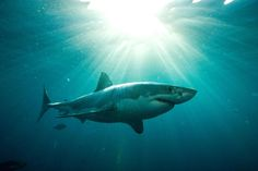 Australian Sharks Tweet They Are Coming For You