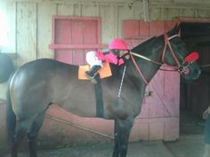 Legit cutest thing i have seen all day! which reminds me.... 9 DAYS UNTIL THE KENTUCKY DERBY, PEOPLE!!! MAY 2nd!!!
