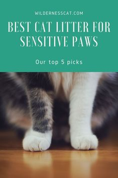 Does your cat have healing paws, sensitive skin, or an allergy? These are our five favorite cat litters for sensitive paws. #cats #kittens Natural Cat Litter, Best Cat Litter, Paper Cat Litter, Litter Box, Cat Paws, Dog Cat, Cat Care Tips, Pet Tips